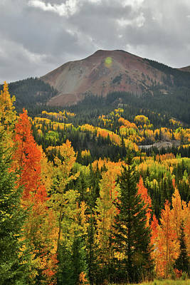 Photograph - Brilliantly Colored Aspens At Red Mountain Pass by Ray Mathis