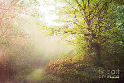 Photograph - Broceliand Path by Dominique Guillaume