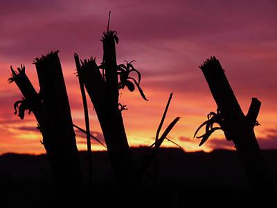 Jonny Jelinek Royalty-Free and Rights-Managed Images - Broken Trees - Sunset Silhouettes by Jonny Jelinek