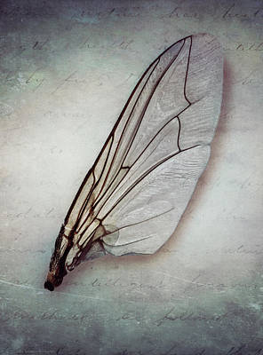 Photograph - Broken Wing by Jaroslaw Blaminsky