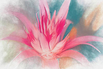 Mixed Media - Bromeliad Abstract by Deborah Benoit
