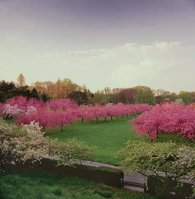 Botanical Photograph - Brooklyn Botanical Gardens Spring Color by Richard Felber