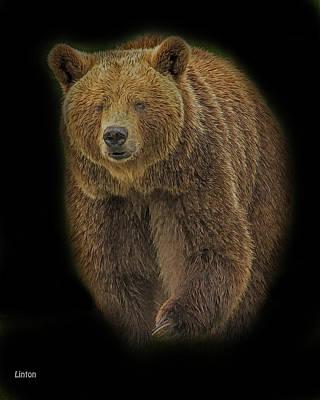 Digital Art - Brown Bear In Darkness by Larry Linton