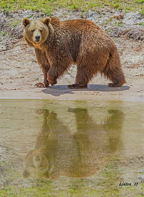 Photograph - Brown Bear Reflection by Larry Linton