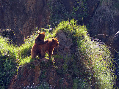 Photograph - Brown Bears - Cabarceno by Phil Banks