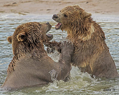 Digital Art - Brown Bears Fighting by Larry Linton