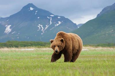 Photograph - Brown Bears, Katmai National Park by Mint Images/ Art Wolfe