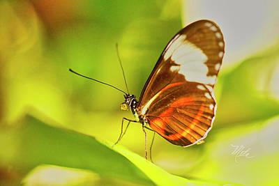 Photograph - Brown Butterfly On Leaf by Meta Gatschenberger