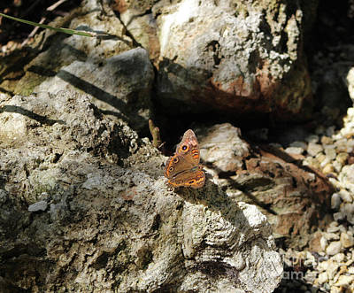 Animals Royalty-Free and Rights-Managed Images - Brown Butterfly by Takisha Hearne
