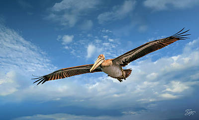 Photograph - Brown Pelican Four by Endre Balogh