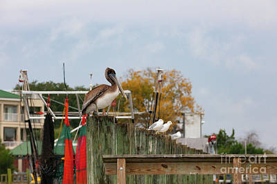 Photograph - Brown Pelican - Shem Creek by Dale Powell