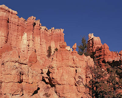 Photograph - Bryce Canyon Looking Up by Tom Daniel