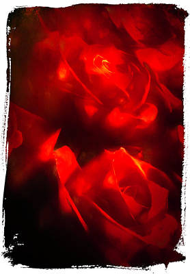Photograph - Blush of Roses 6912 by Barry Styles
