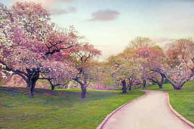 Photograph - The Cherry Path by Jessica Jenney