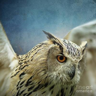 Mixed Media - Bubo Bubo Sibiricus by Eva Lechner