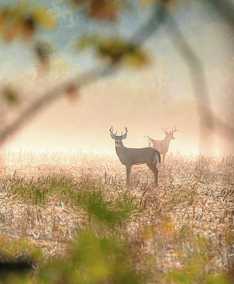 Photograph - Buck On Foggy Autumn Morning by Dan Sproul