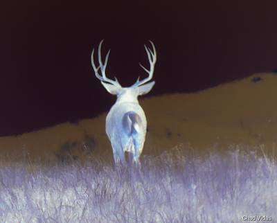 Advertising Archives - Buck On The Move by Chad Vidas