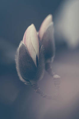 Photograph - Buds Of Zen Magnolia Boho Style by Jenny Rainbow