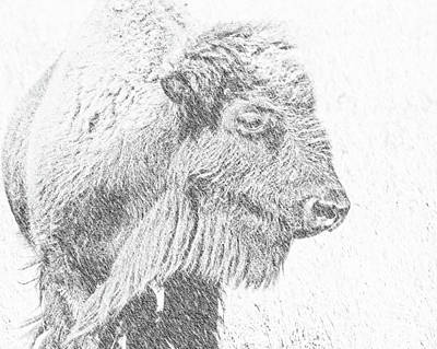 Photograph - Buffalo Blizzard by Amanda Smith