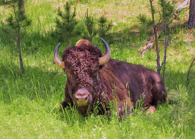 Photograph - Buffalo Breather by John M Bailey