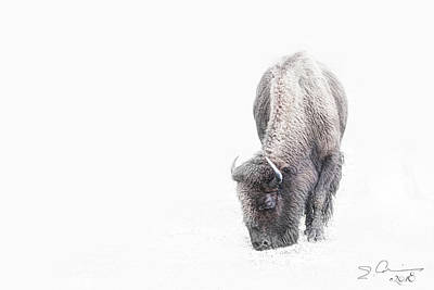 Photograph - Buffalo In White by Evie Carrier