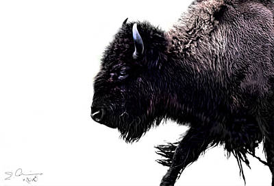 Photograph - Buffalo On White by Evie Carrier