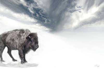 Photograph - Buffalo Winter by Evie Carrier