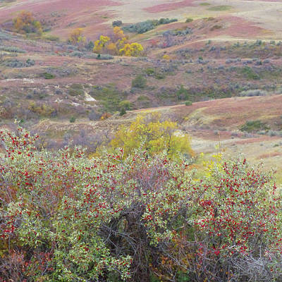 Photograph - Buffaloberry Prairie by Cris Fulton