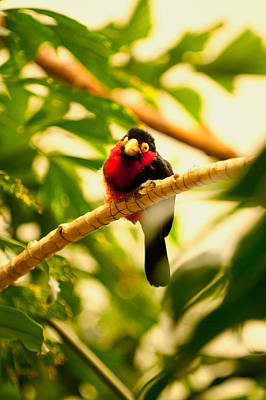 Photograph - Bug Eyed by Paul Mangold