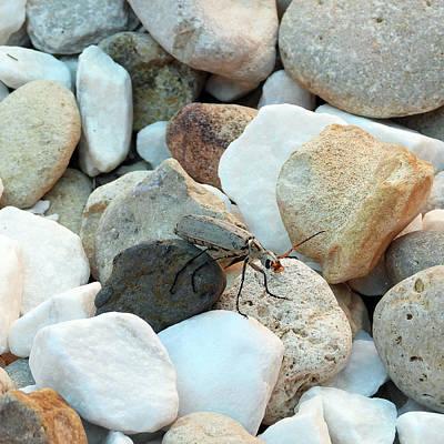 Wall Art - Photograph - Bug On The Rocks by David G Paul