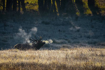 Photograph - Bull Elk Bugling by Kari Andresen