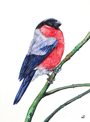 Painting - Bullfinch by Zaira Dzhaubaeva
