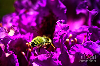 Photograph - Bumble Bee On A Rhodedendron  by Bruce Block
