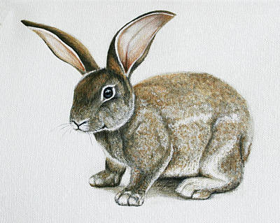 Painting - Bunny 1 by Ann Lauwers
