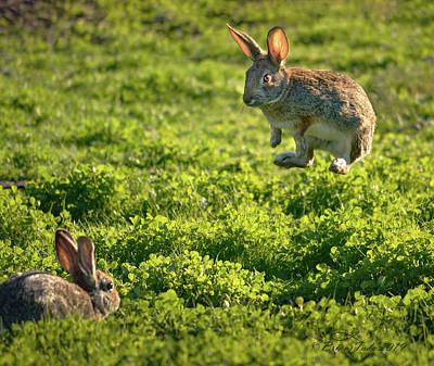 Hollywood Style - Airborne Bunny by Brian Tada