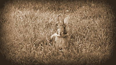 Photograph - Bunny Sitting by Kimberly Woyak