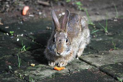 Photograph - Bunny Wants A Carrot by Trina Ansel