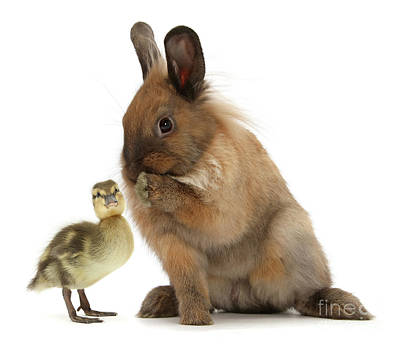 Photograph - Bunny Whisperer by Warren Photographic