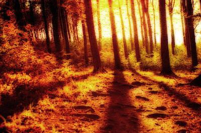 Jonny Jelinek Royalty-Free and Rights-Managed Images - Burning Forest by Jonny Jelinek