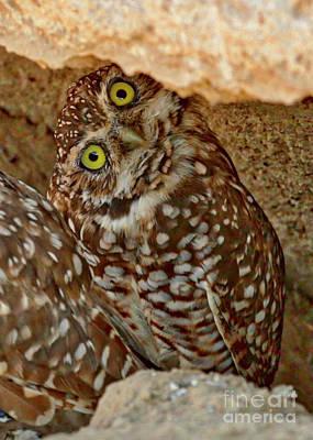 Photograph - Burrowing Owl Side Eye by Carol Groenen