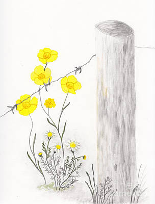 Drawing - Buttercups And Chamomile By Fence by Conni Schaftenaar
