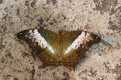 Winter Animals - Butterflies 2 by Dwight Cook