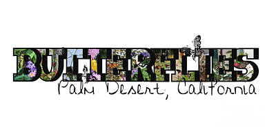 Photograph - Butterflies Big Letter Palm Desert California by Colleen Cornelius