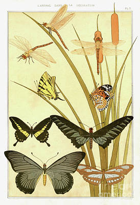 Drawing - Butterflies By Maurice Pillard Verneuil by Maurice Pillard Verneuil