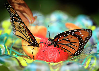 Photograph - Butterflies Dining Out by John Rizzuto