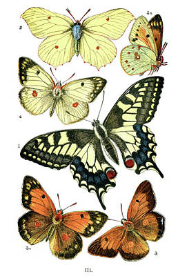 Butterfly Digital Art - Butterflies by Duncan1890