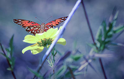 Photograph - Butterfly-01 by Karen Rispin