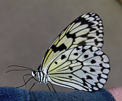Photograph - Butterfly 1 by Charles HALL
