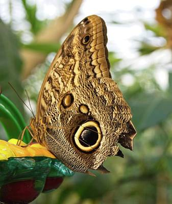 Photograph - Butterfly 4 by Charles HALL