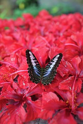 Insect Photograph - Butterfly by Aleksandr Morozov